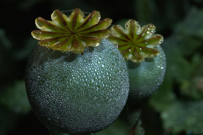 adelaparvu-com-despre-plante-care-fac-gradina-frumoasa-toamna-si-iarna-text-carli-marian-in-foto-macul-2