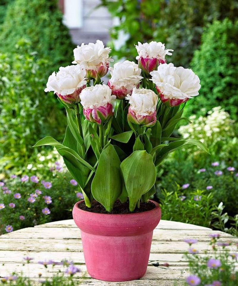 adelaparvu-com-dspre-plantare-bulbilor-de-primavara-text-carli-marian-1