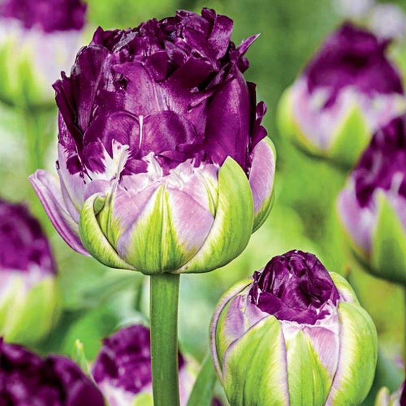 adelaparvu-com-dspre-plantare-bulbilor-de-primavara-text-carli-marian-2