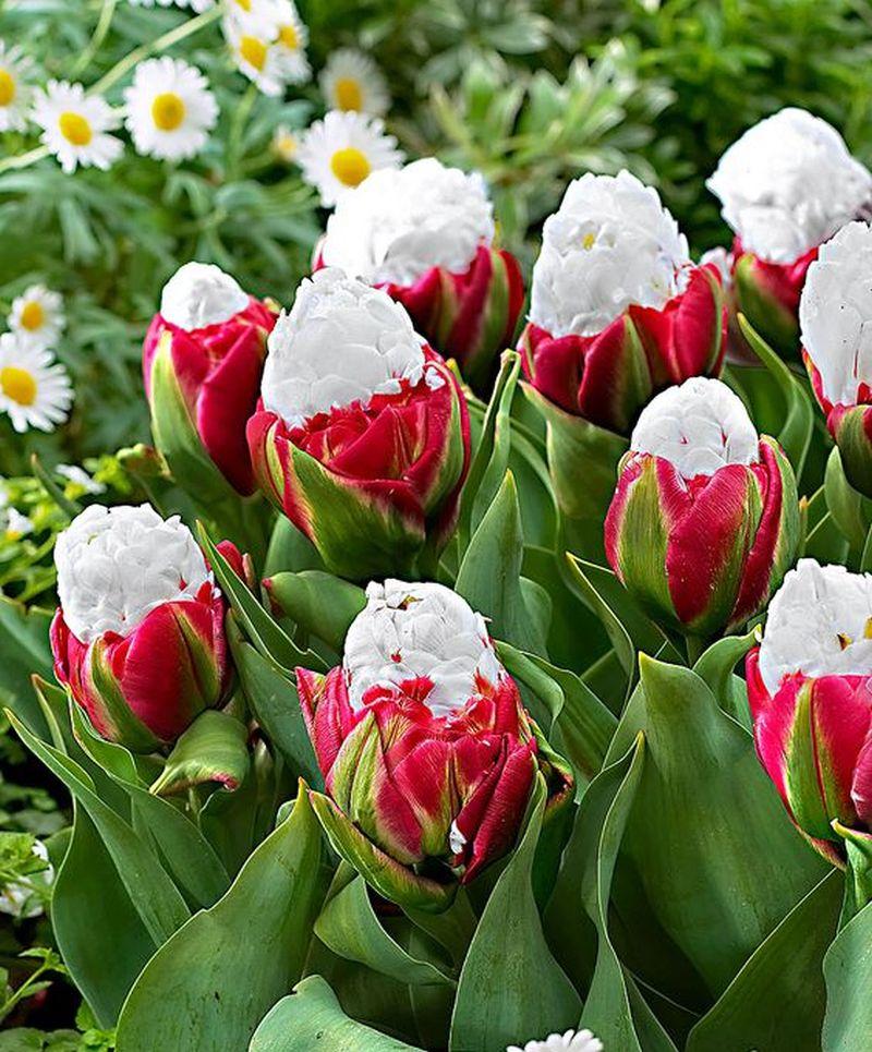 adelaparvu-com-dspre-plantare-bulbilor-de-primavara-text-carli-marian-6