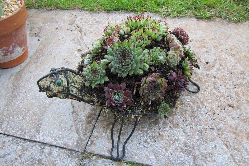 adelaparvu-com-despre-plante-suculente-rezistente-la-frig-text-carli-marian-1