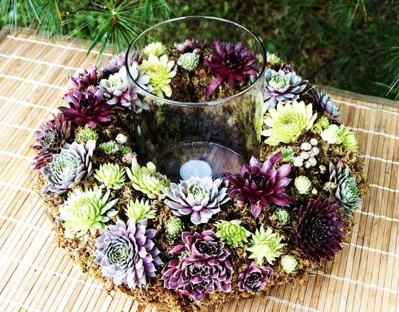 adelaparvu-com-despre-plante-suculente-rezistente-la-frig-text-carli-marian-11