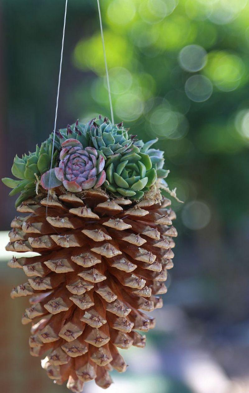 adelaparvu-com-despre-plante-suculente-rezistente-la-frig-text-carli-marian-2