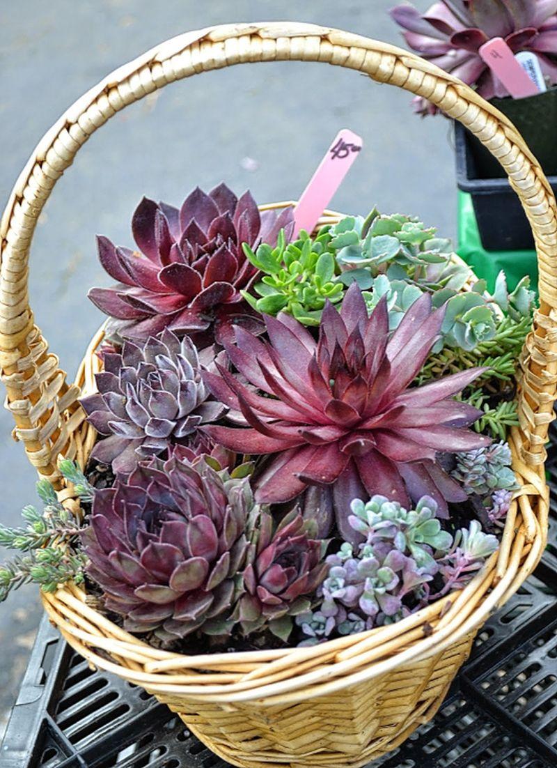adelaparvu-com-despre-plante-suculente-rezistente-la-frig-text-carli-marian-3