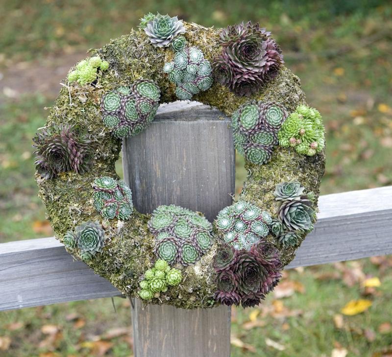 adelaparvu-com-despre-plante-suculente-rezistente-la-frig-text-carli-marian-6
