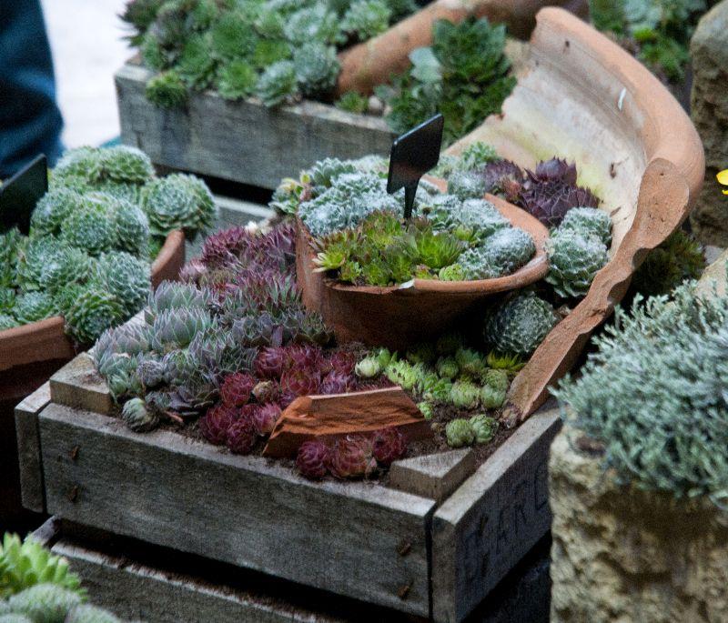 adelaparvu-com-despre-plante-suculente-rezistente-la-frig-text-carli-marian-7