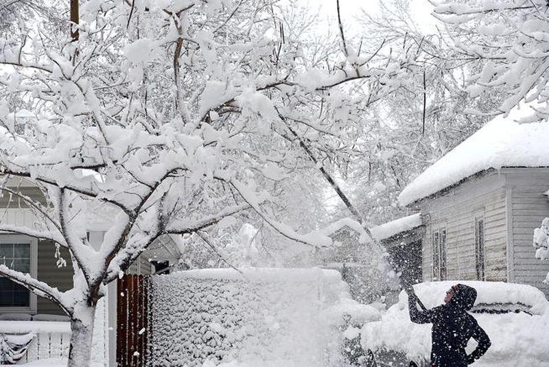 adelaparvu.com despre ingrijirea plantelor iarna, in Foto paduche lanos, text Carli Maian (1)
