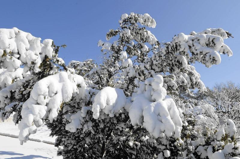 adelaparvu.com despre ingrijirea plantelor iarna, in Foto paduche lanos, text Carli Maian (2)