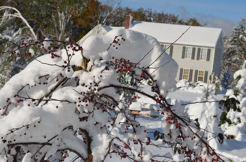 adelaparvu.com despre ingrijirea plantelor iarna, in Foto paduche lanos, text Carli Maian (3)