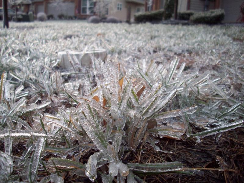 adelaparvu.com despre ingrijirea plantelor iarna, in Foto paduche lanos, text Carli Maian (4)