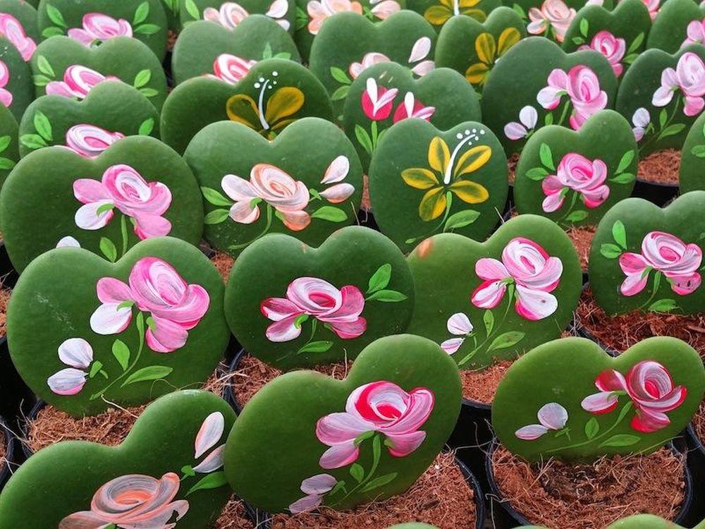 adelaparvu.com despre plante simboluri ale iubirii, Text Carli Marian, In Foto Hoya kerry (3)