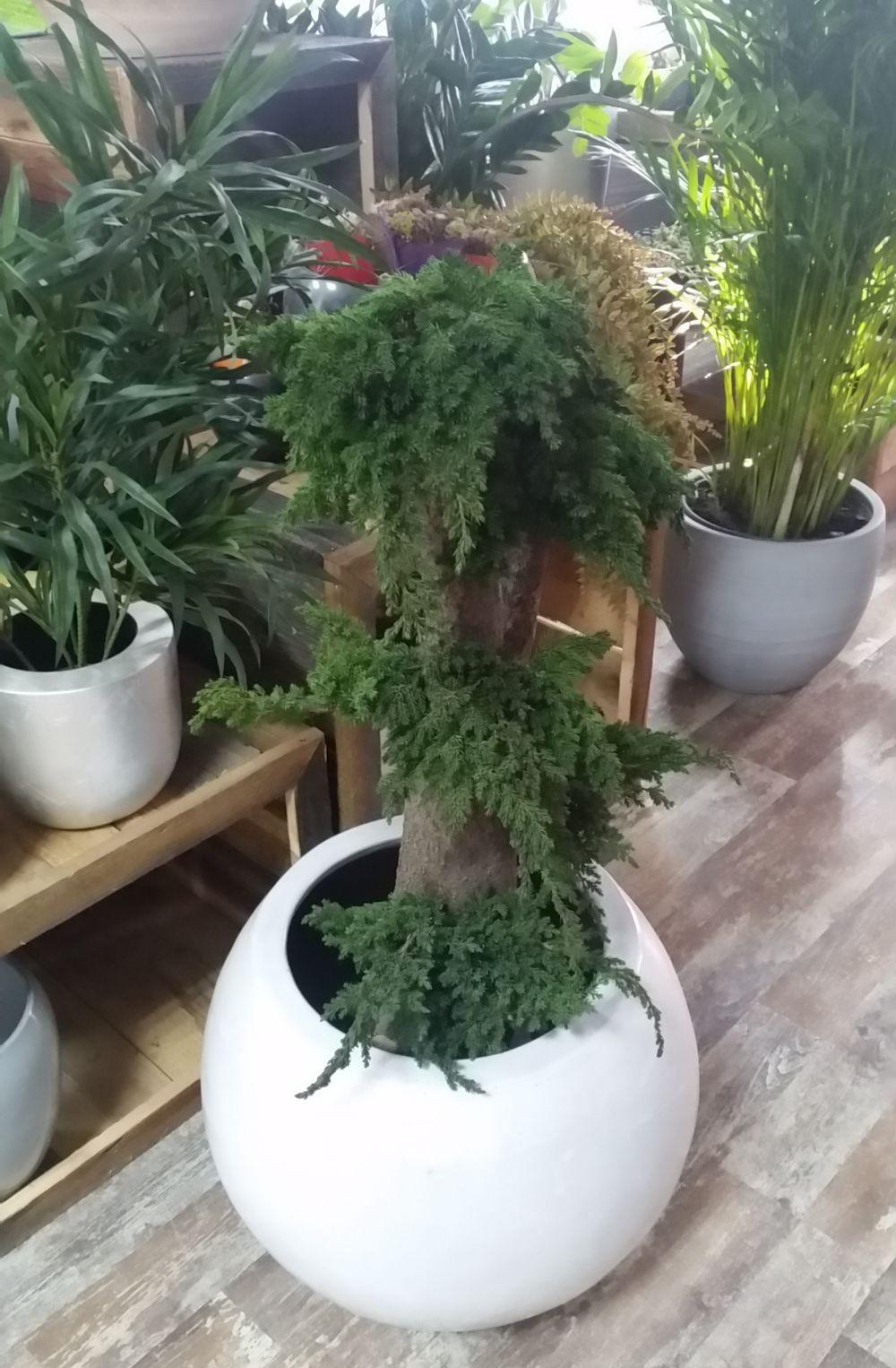 adelaparvu.com despre tablouri cu plante stabilizate, design Arta Gradinilor, Bucuresti (17)