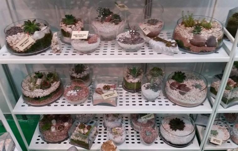 adelaparvu.com despre Terrarium Shop, vase si terarii produse in Romania (5)