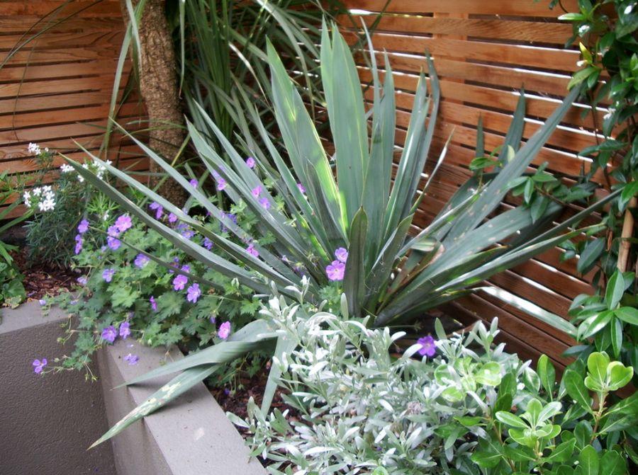 adelaparvu.com despre gradina urbana reamenajata, Londra, Design Jenny Bloom Garden Design (6)