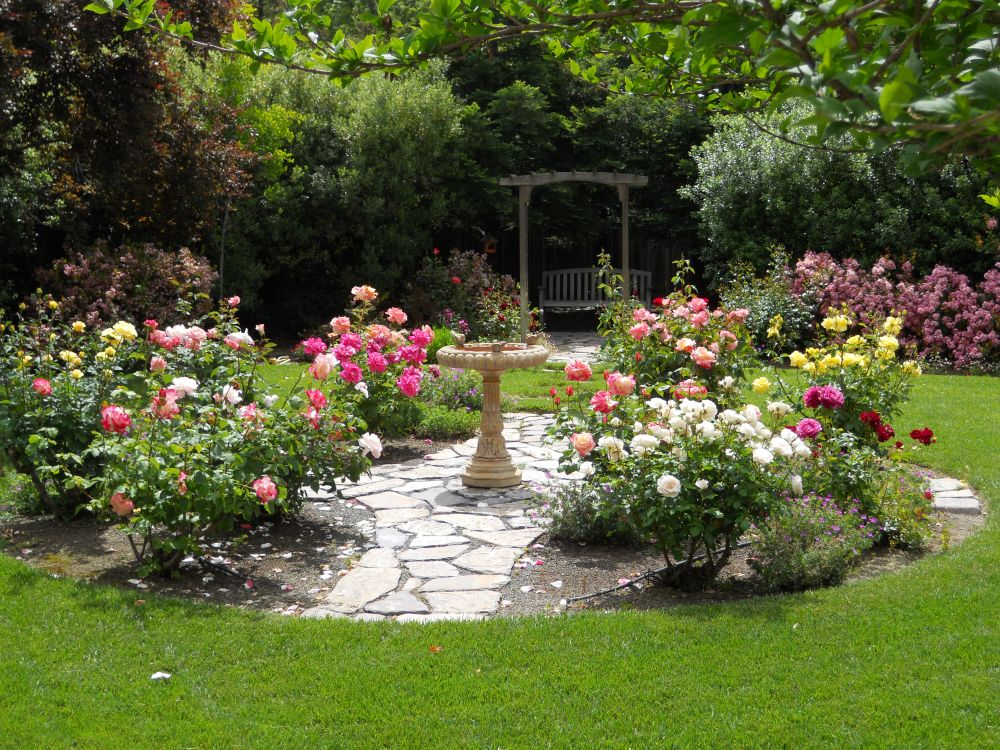 adelaparvu.com despre taierea de primavara a trandafirilor, Text Carli Marian (10)