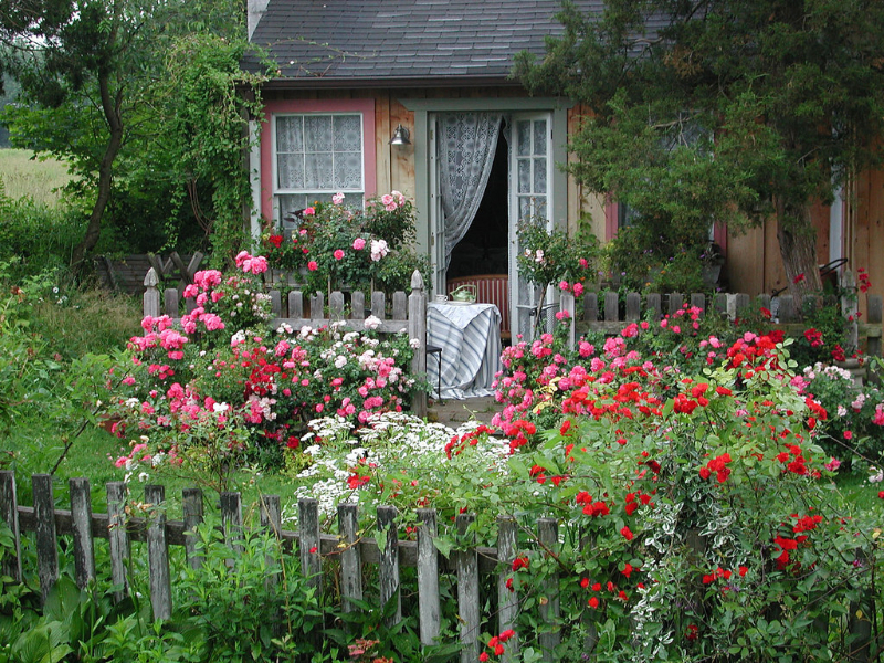 adelaparvu.com despre taierea de primavara a trandafirilor, Text Carli Marian (6)