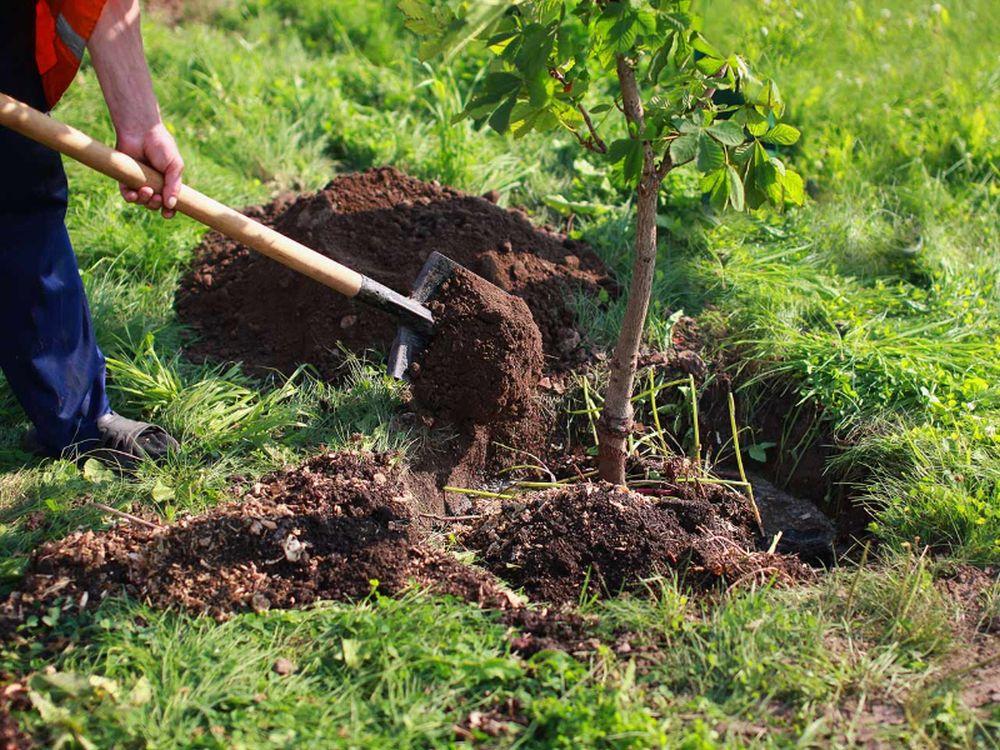 adelaparvu.com despre mutarea arborilor in gradina, Text Carli Marian (1)