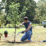 adelaparvu.com despre mutarea arborilor in gradina, Text Carli Marian (3)
