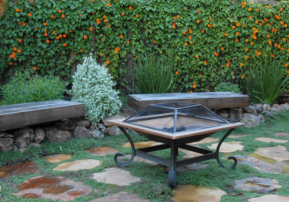 adelaparvu.com despre top 5 plante cataratoare, Text Carli Marian, In foto Thunbergia Alata (1)
