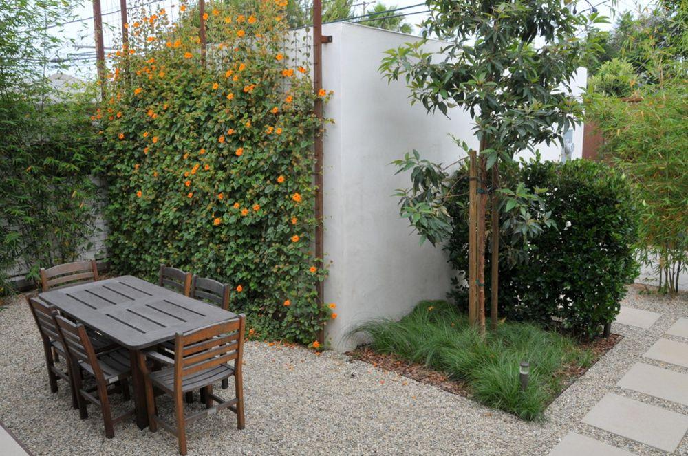 adelaparvu.com despre top 5 plante cataratoare, Text Carli Marian, In foto Thunbergia Alata (3)