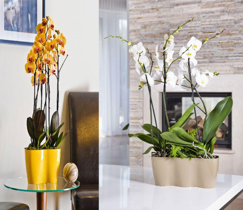 adelaparvu.com despre ghivece potrivite orhideelor, Text Carli Marian (10)