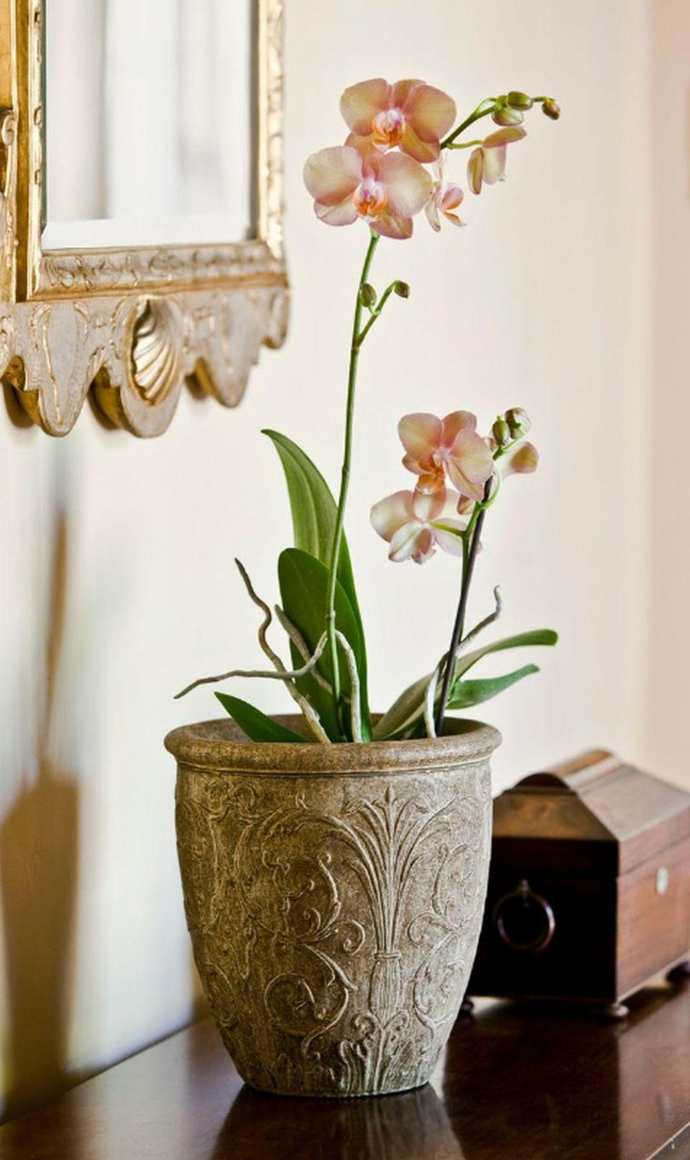 adelaparvu.com despre ghivece potrivite orhideelor, Text Carli Marian (2)