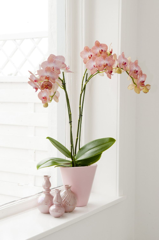 adelaparvu.com despre ghivece potrivite orhideelor, Text Carli Marian (4)