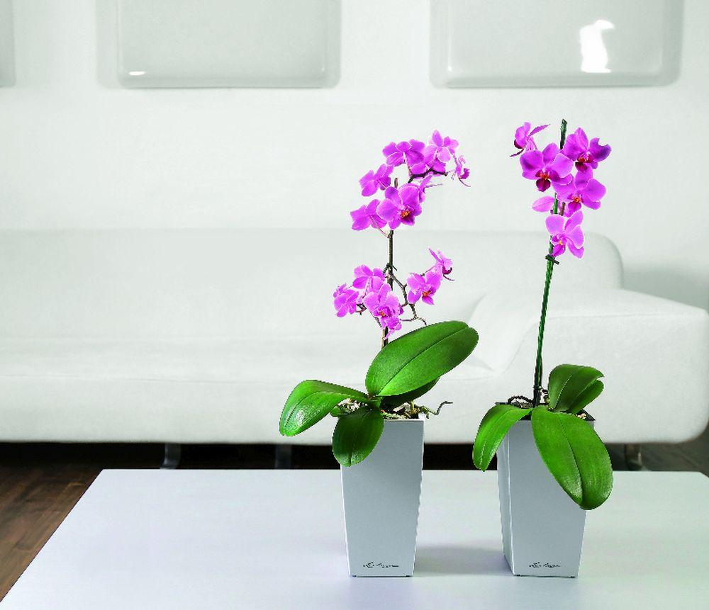 adelaparvu.com despre ghivece potrivite orhideelor, Text Carli Marian (6)