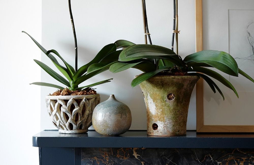 adelaparvu.com despre ghivece potrivite orhideelor, Text Carli Marian (7)