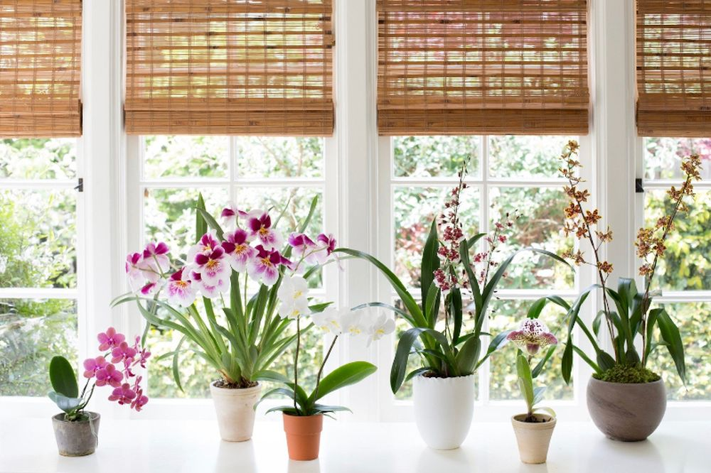adelaparvu.com despre ghivece potrivite orhideelor, Text Carli Marian (8)