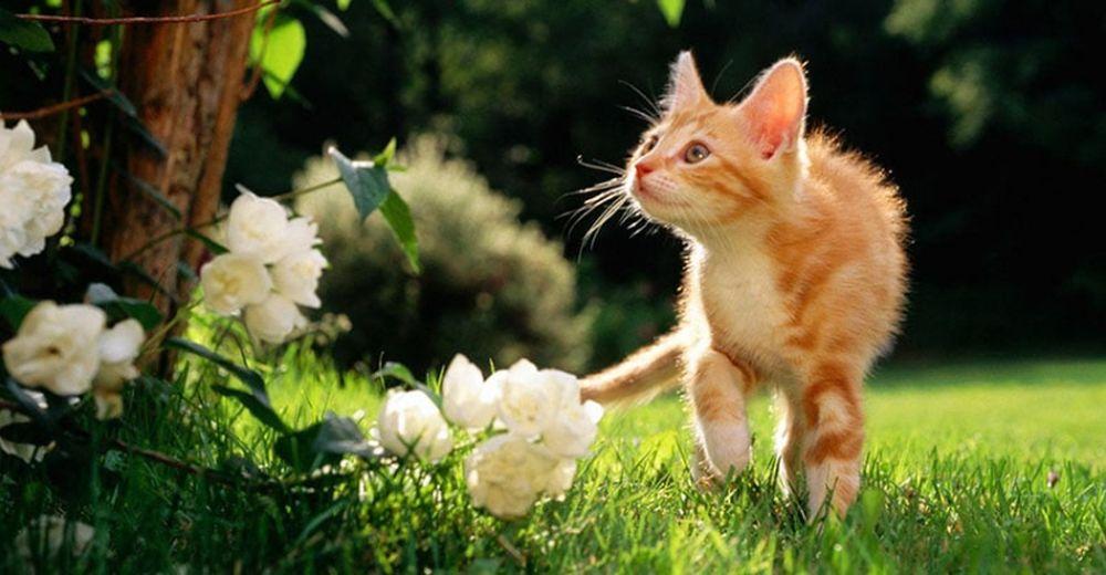adelaparvu.com despre protectia gradinii impotriva animalelor de companie, Text Carli Marian (3)