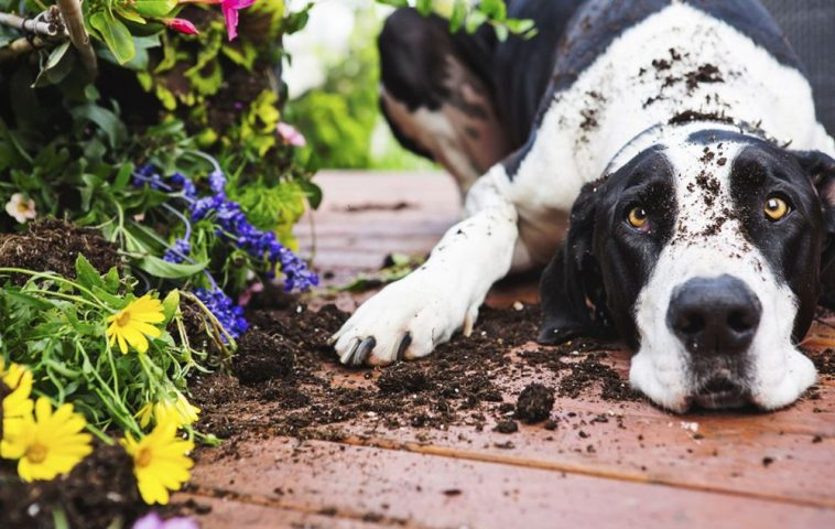 adelaparvu.com despre protectia gradinii impotriva animalelor de companie, Text Carli Marian (4)