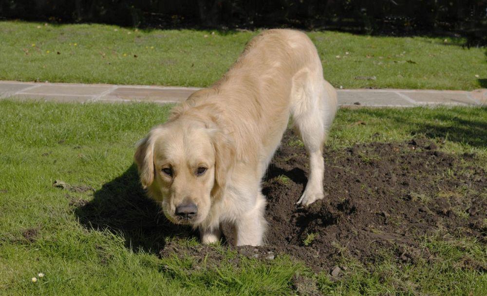 adelaparvu.com despre protectia gradinii impotriva animalelor de companie, Text Carli Marian (5)