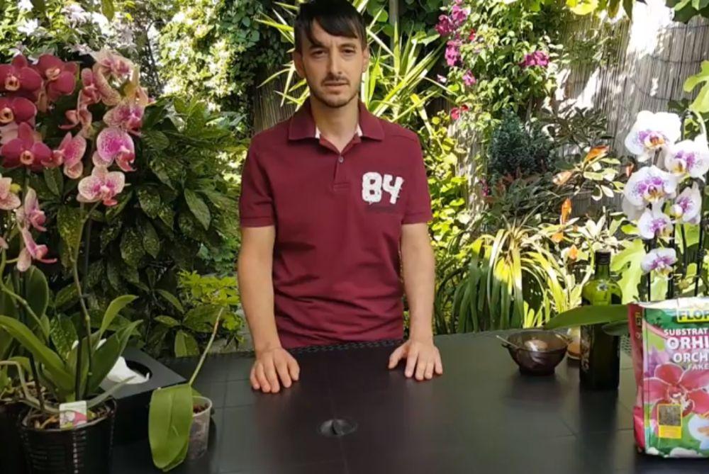 adelaparvu.com despre salvarea orhideelor cu radacini putrezite, Video Carli Marian (2)