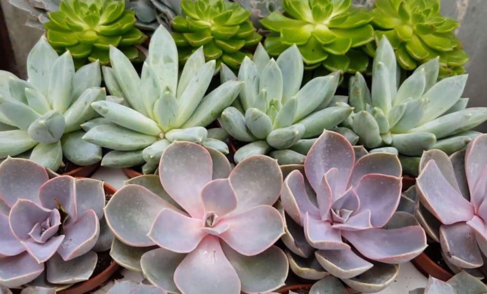 adelaparvu.com despre aranjament cu plante suculente, Carli Marian (1)