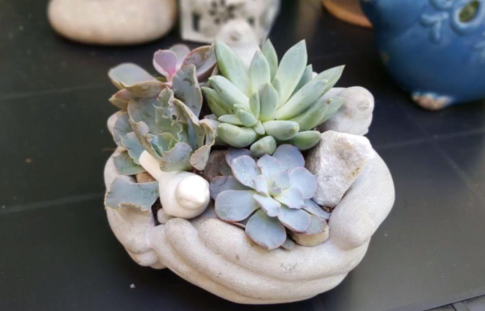 adelaparvu.com despre aranjament cu plante suculente, Carli Marian (2)
