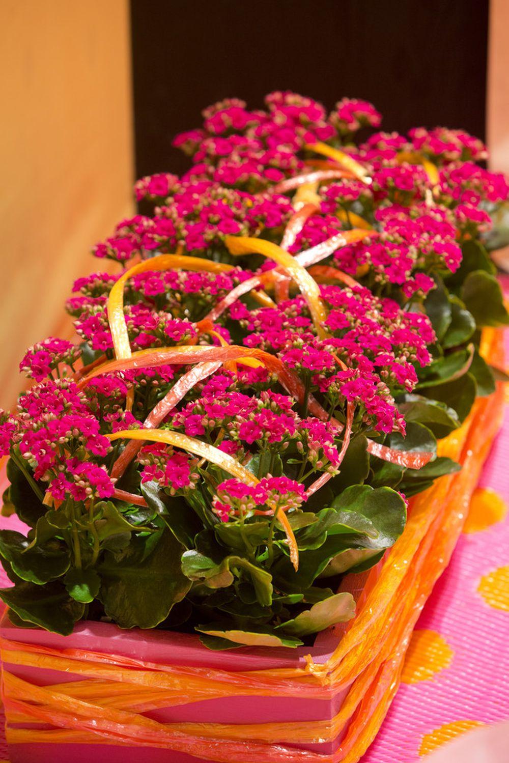 adelaparvu.com despre inflorerea plantei Kalanchoe, Text Carli Marian, Foto Floradania (3)