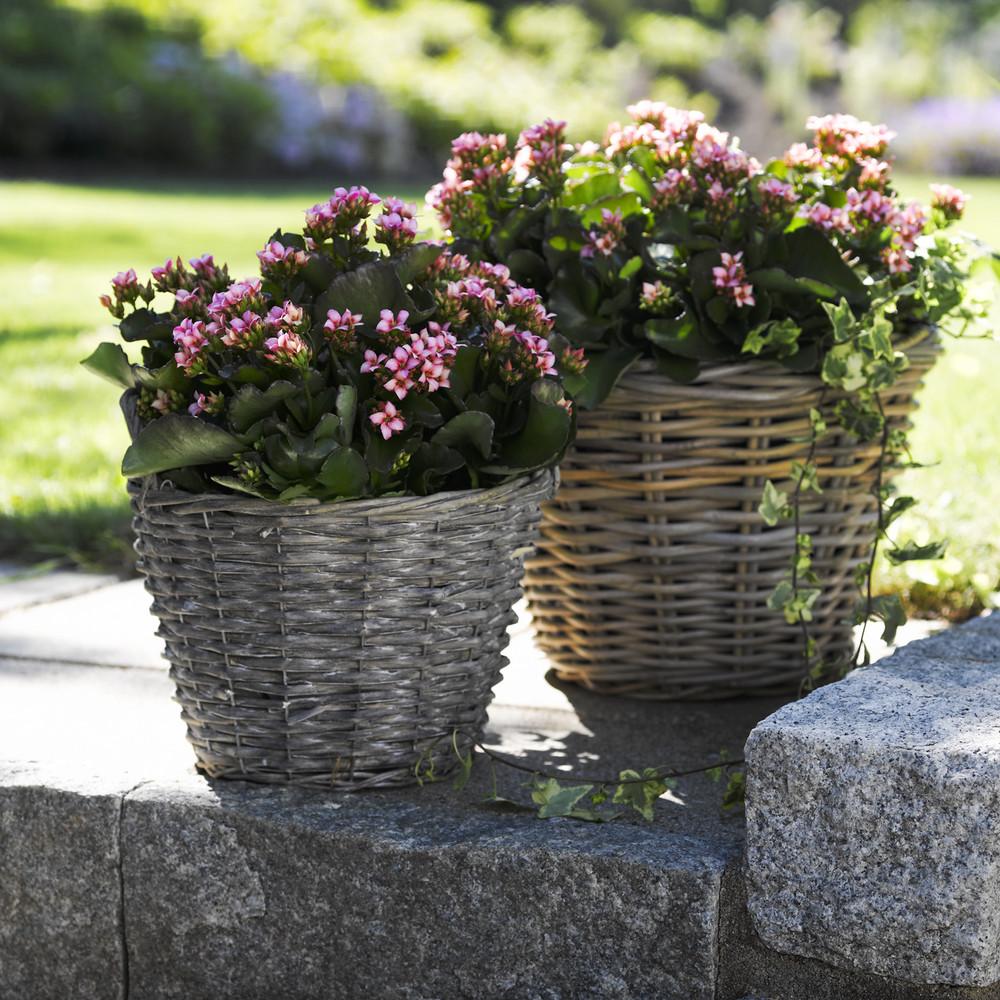 adelaparvu.com despre inflorerea plantei Kalanchoe, Text Carli Marian, Foto Floradania (5)