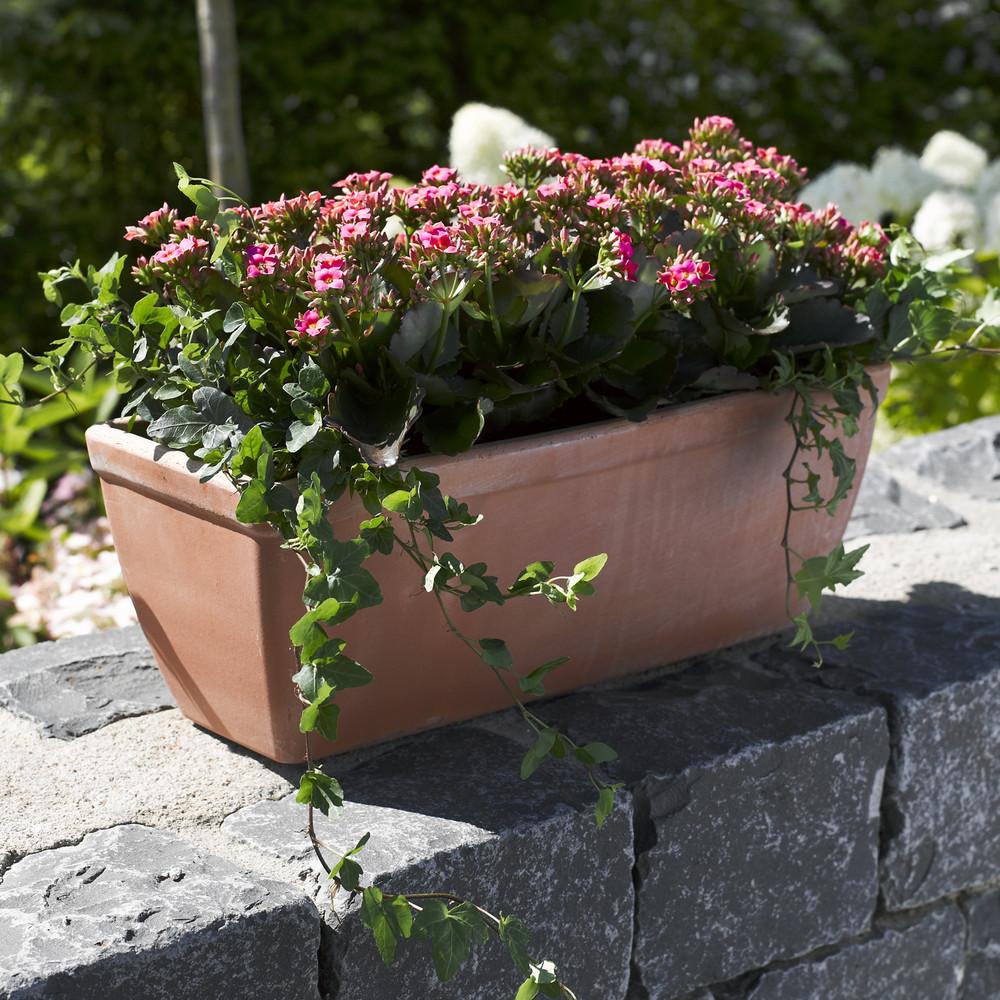 adelaparvu.com despre inflorerea plantei Kalanchoe, Text Carli Marian, Foto Floradania (6)