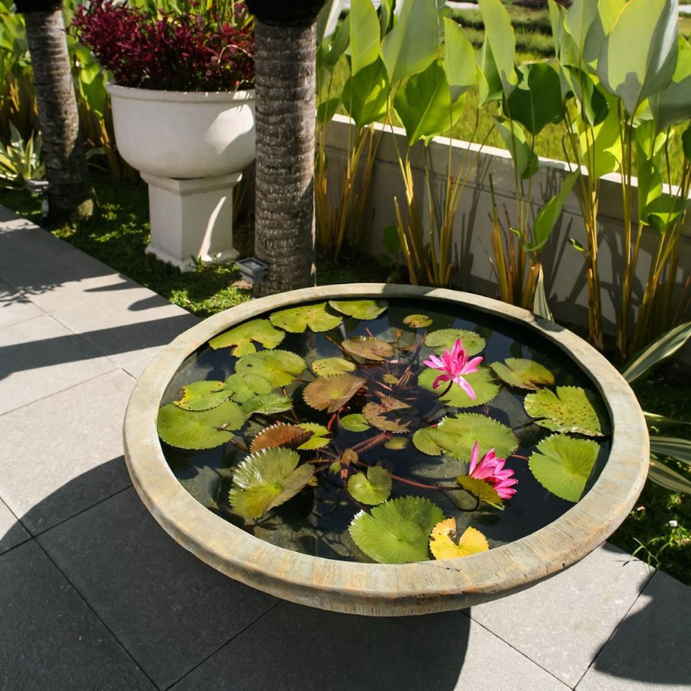adelaparvu.com despre nufar, Water Lily, Text Carli Marian (5)