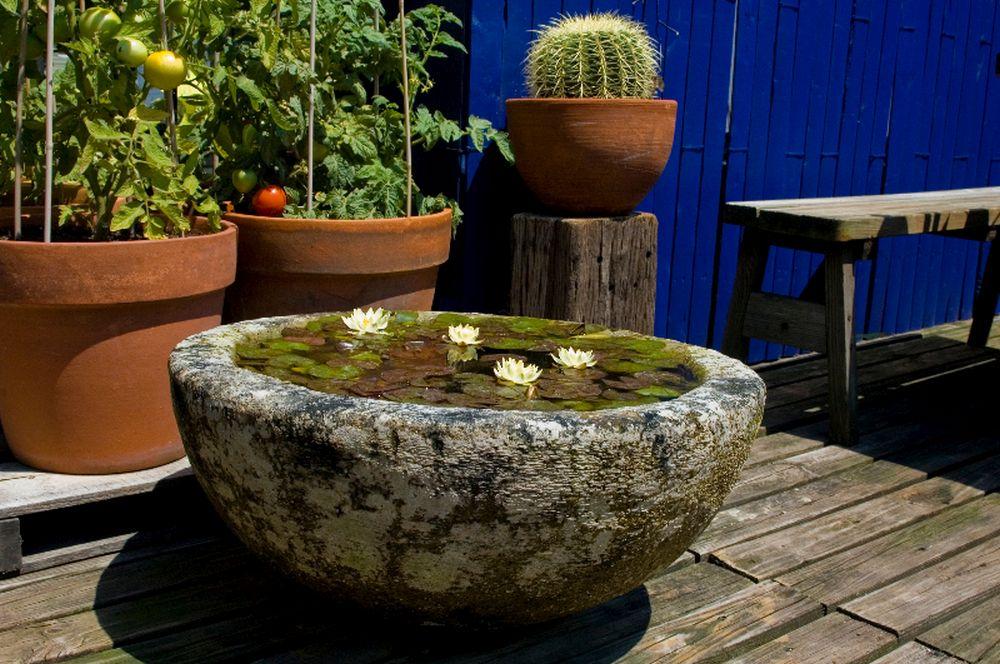 adelaparvu.com despre nufar, Water Lily, Text Carli Marian (6)
