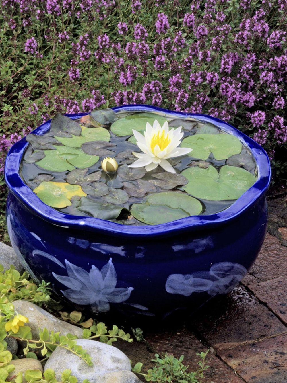 adelaparvu.com despre nufar, Water Lily, Text Carli Marian (8)