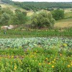 Grădina lui Corogeanu din Delea, județul Vaslui