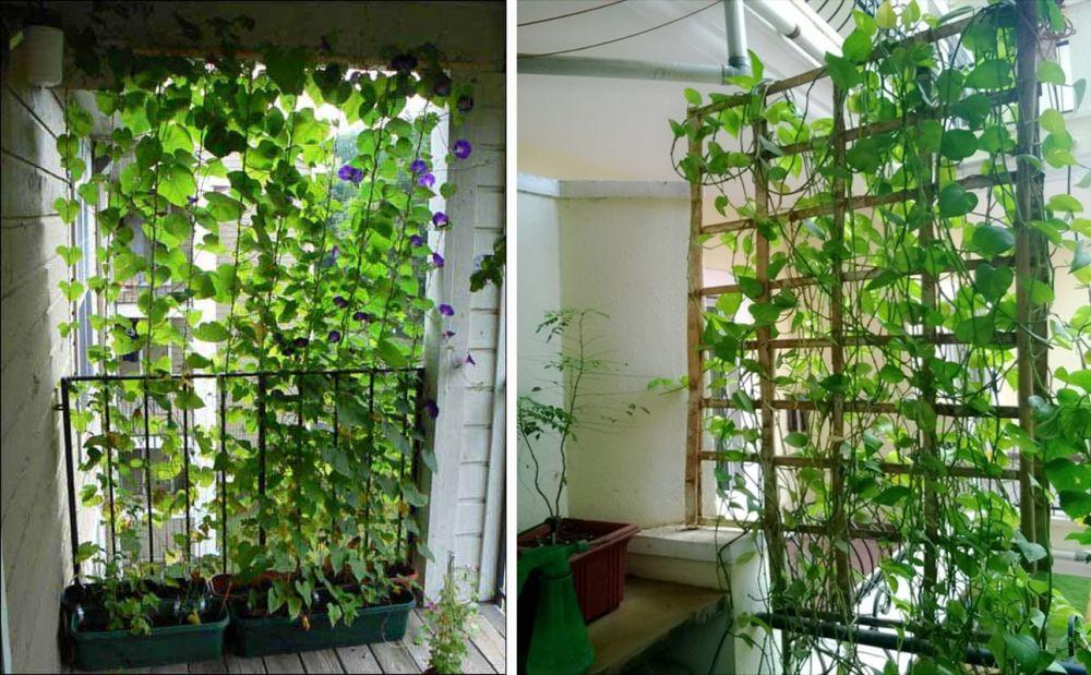 adelaparvu.com despre paravane pe balcon, solutii pentru intimitate (18)