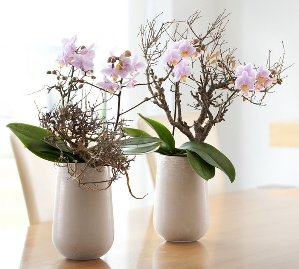 adelaparvu.com despre reinflorirea orhideelor, text Carli Marian, Foto Floradania (1)