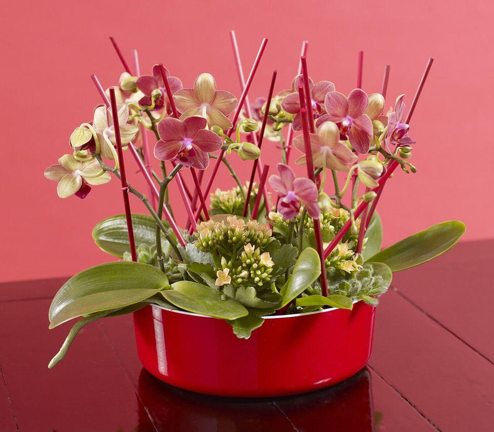 adelaparvu.com despre reinflorirea orhideelor, text Carli Marian, Foto Floradania (2)