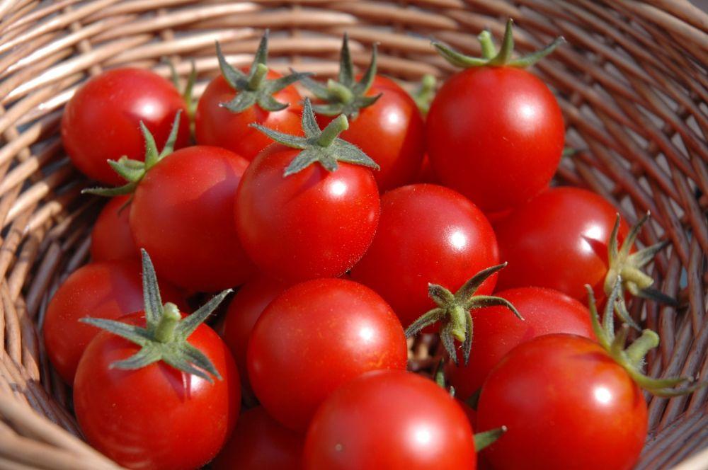 adelaparvu.com despre rosii cherry, tomate cherry pe timp de vara (4)