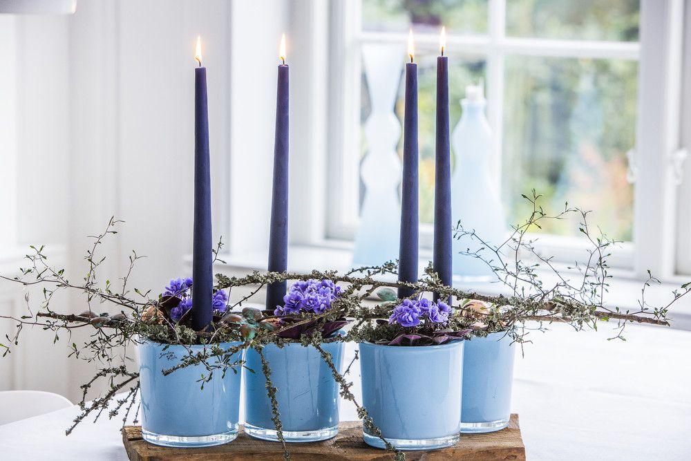 adelaparvu.com despre violetele de Parma, Saintpaulia, Text Carli Marian, Foto Floradania (12)
