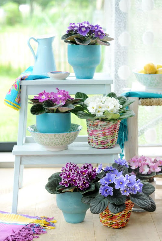 adelaparvu.com despre violetele de Parma, Saintpaulia, Text Carli Marian, Foto Floradania (13)