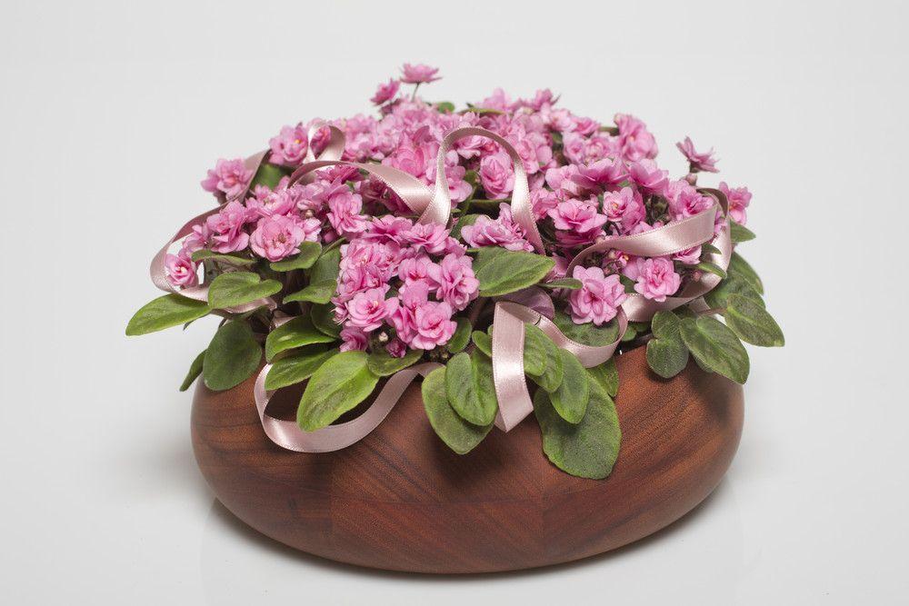 adelaparvu.com despre violetele de Parma, Saintpaulia, Text Carli Marian, Foto Floradania (5)